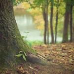 Un miembro de la Comunidad EH! crea el primer bosque de Pymes