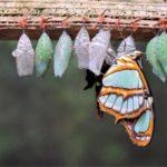 Desarrollando claves y recursos en mi transformación